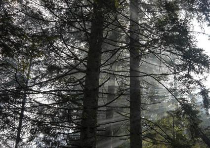 automne-cabane-vosges