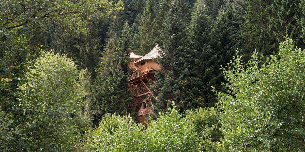 Maison dans les arbres ark survival evolved une cabane - Cabane dans les arbres selection originale ...